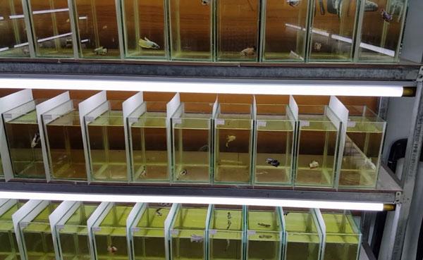 Cắt kính bể cá theo yêu cầu tại Hải Phòng