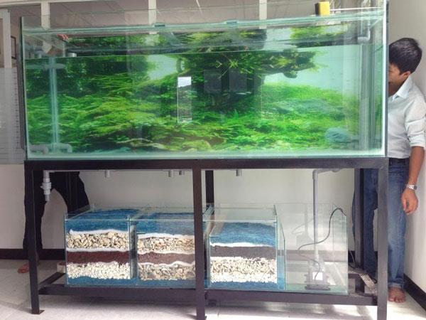 Địa chỉ cắt kính bể cá tại Hải Phòng