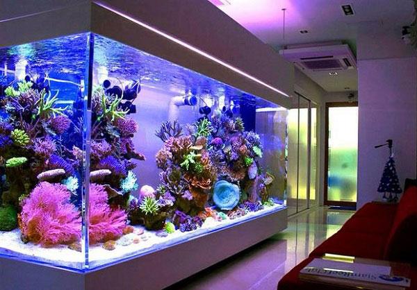 Làm bể cá giá rẻ tại Hải Phòng