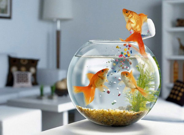 Làm bể cá theo yêu cầu tại Hải Phòng